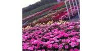 北京爱情海玫瑰文化传播有限公司